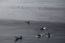 A flock of birds fly near some surfers in Santa Cruz, Calif., on Thursday, June 21, 2018. A bill to make surfing the official sport of California is finding little resistance as it heads for a state Senate hearing. (Randy Vazquez/ Bay Area News Group)