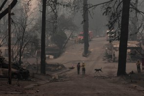 A cadaver dog and law enforcement officials search through ruble from the Camp Fire in Paradise, Calif., on Monday, Nov. 12, 2018. (Randy Vazquez/Bay Area News Group)
