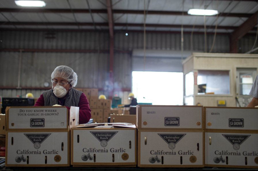 Workers box garlic at Christopher Ranch in Gilroy, Calif., on Wednesday, Jan. 9, 2019. (Randy Vazquez/Bay Area News Group)