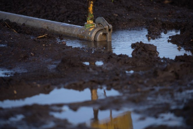 A puddle forms around a sprinkler at B&T Farms in Gilroy, Calif., on Tuesday, April 9, 2019. (Randy Vazquez/Bay Area News Group)